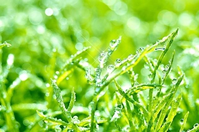 日本で梅雨を「つゆ」と読む由来は?