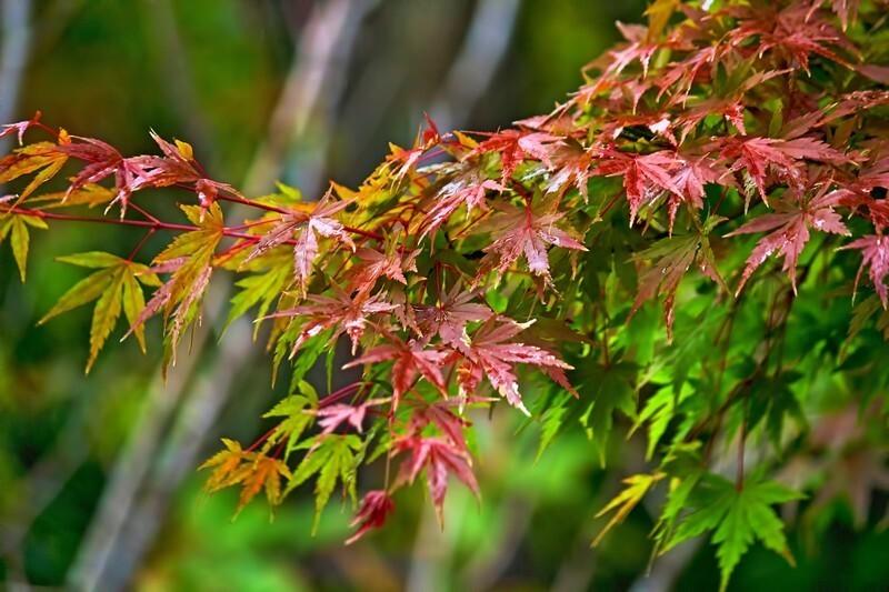 秋の雨の名称と意味
