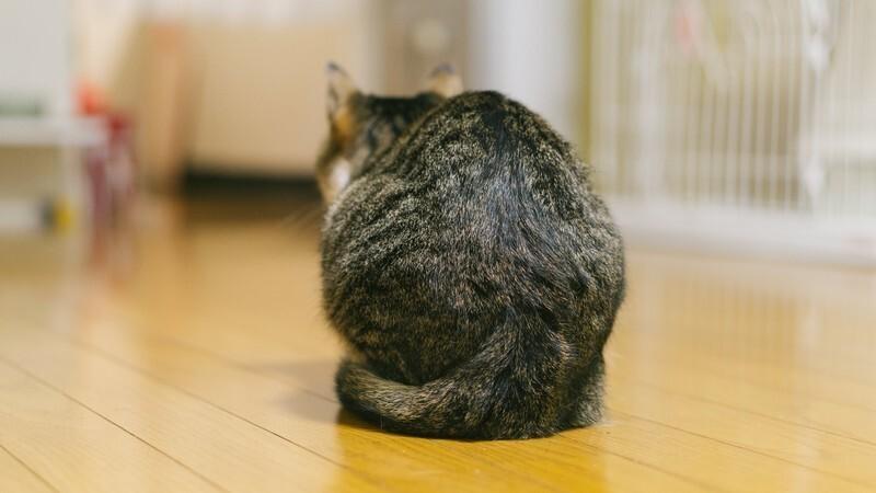 猫背はNG!背筋を伸ばそう