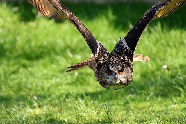 フクロウは生態から「学業」と「金運」アップの意味も