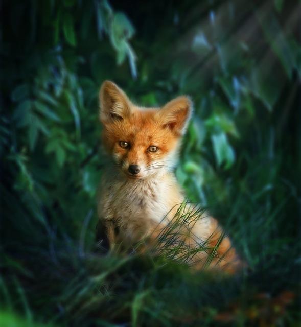 天気雨は狐の仕業とする説