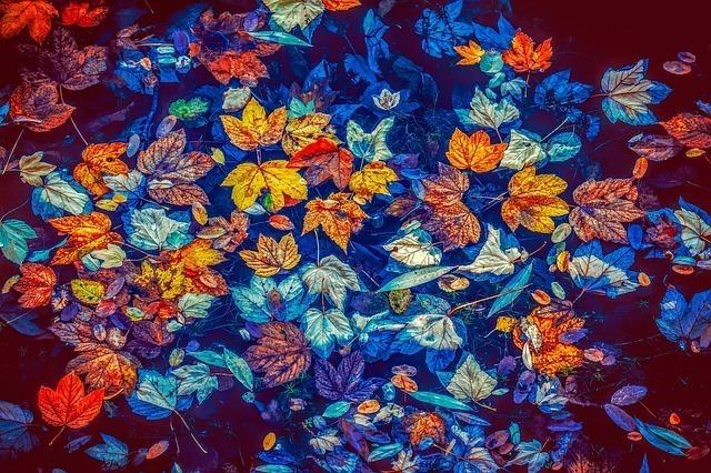 秋の風物詩(あきのもの)で連想する言葉