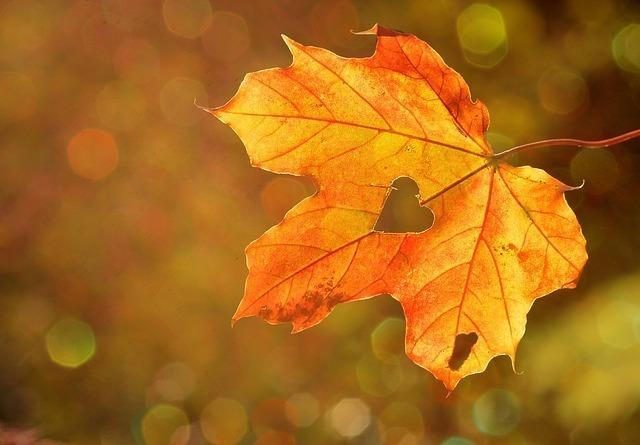 秋の風物詩(あきのもの)で連想する植物