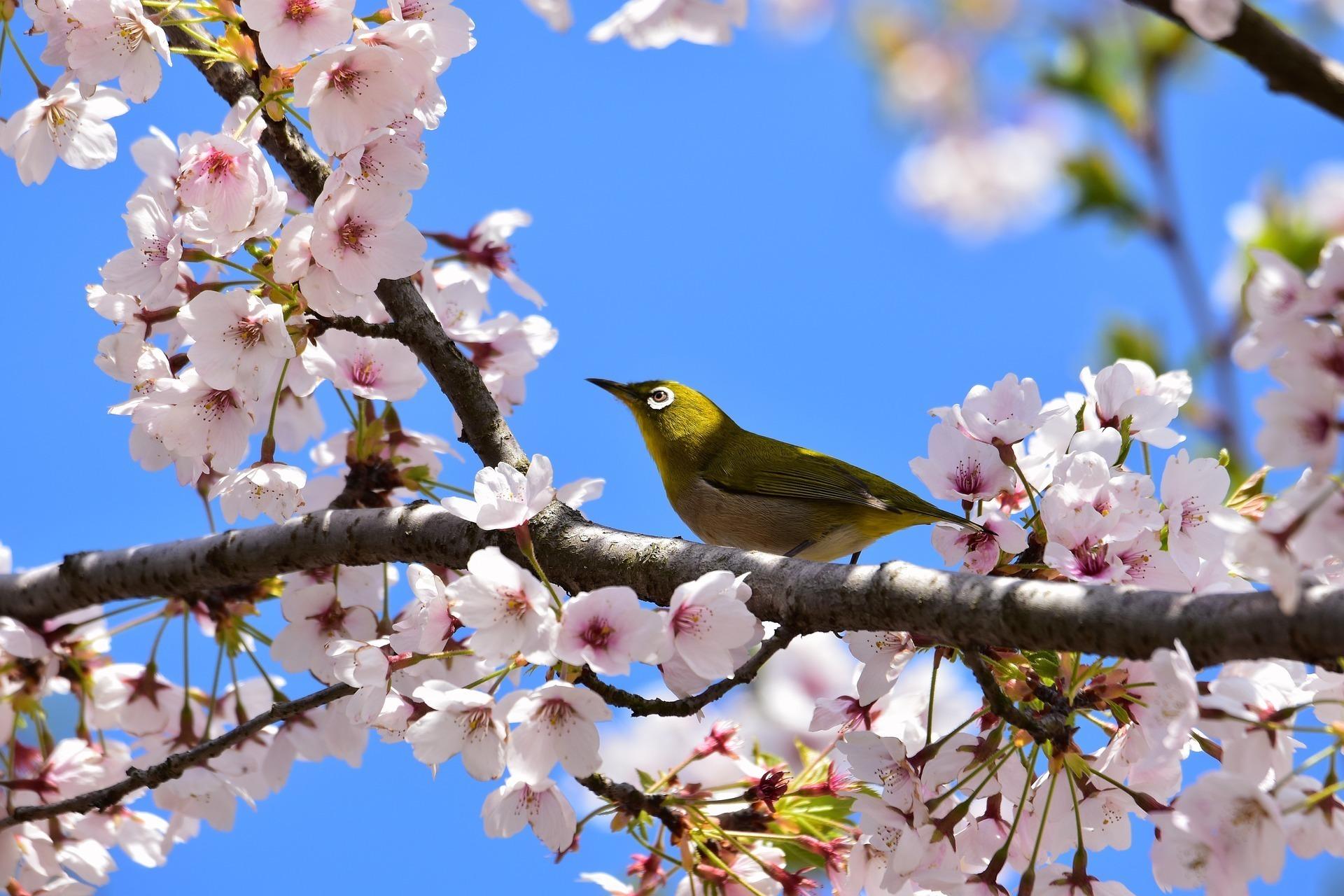 春の有名な短歌