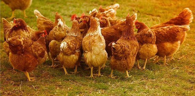 2:鶏ガラスープの素