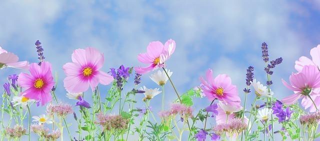 「日本といえば」で連想できる花トップ5