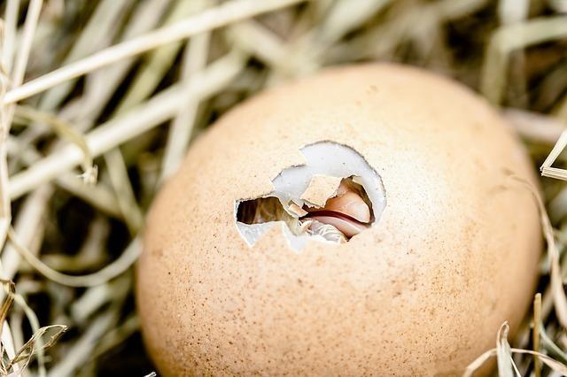 ツバメの巣を撤去するときの注意点