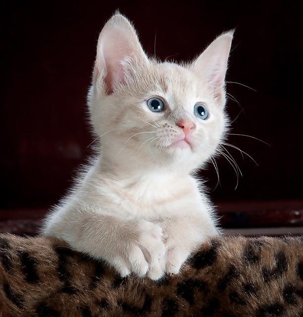 猫の目の色は成長とともに変化する?
