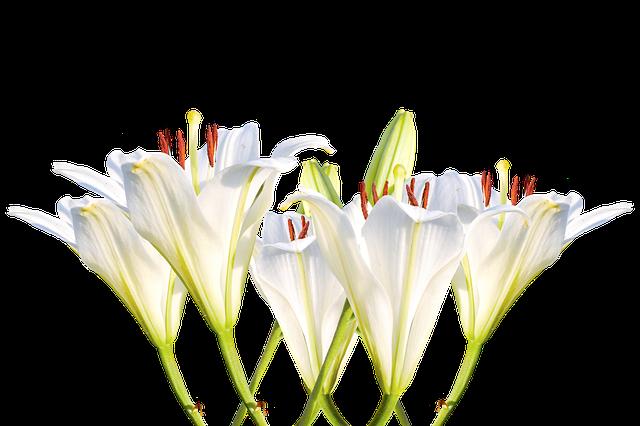 百合を誕生花とする日は?
