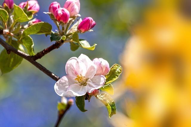 椿は手紙などの季節の挨拶(時候の挨拶)でも使われる