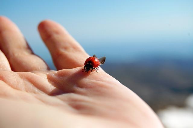 てんとう虫が女性の体にとまったときのスピリチュアルな意味