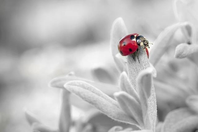てんとう虫がもつスピリチュアルな意味とは?