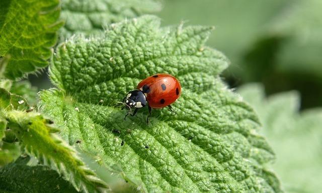 幸運を呼ぶ「てんとう虫」の名前の由来とは?
