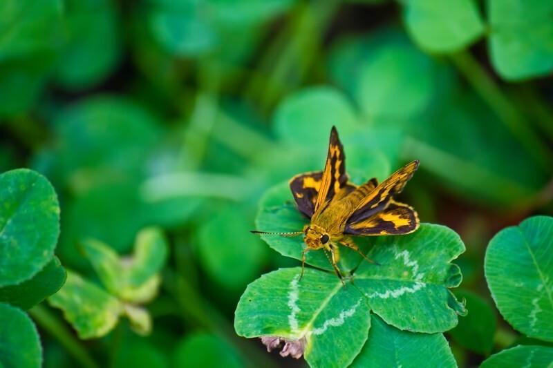 育て方のポイント3.病気や害虫の対策