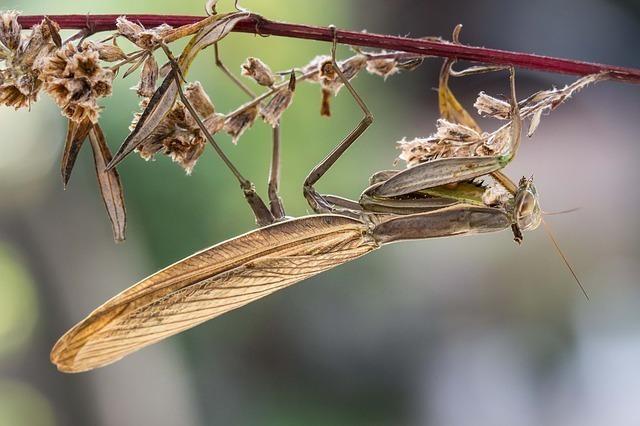 枝につかまるカマキリ