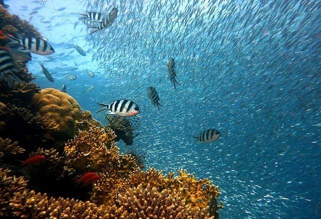 マリアナ海溝の最深部、チャレンジャー海淵