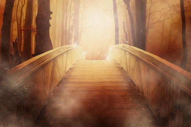 森の奥に続く光の橋