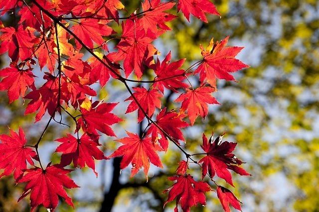 秋を感じる和風・古風な名前