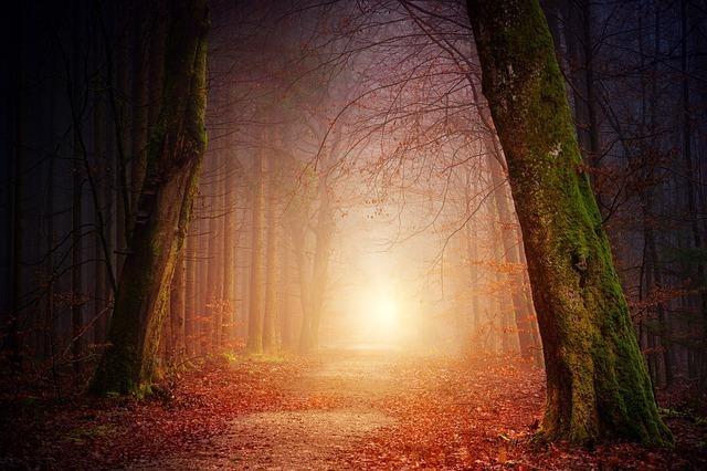 森の奥に見える光