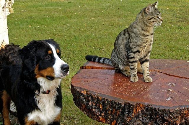 同じ方向を見る犬と猫