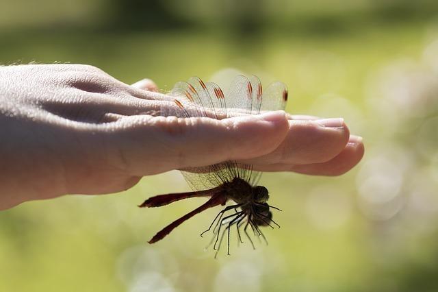 虫を捕まえる手