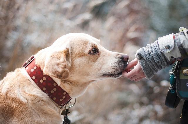 人の手をくわえる犬