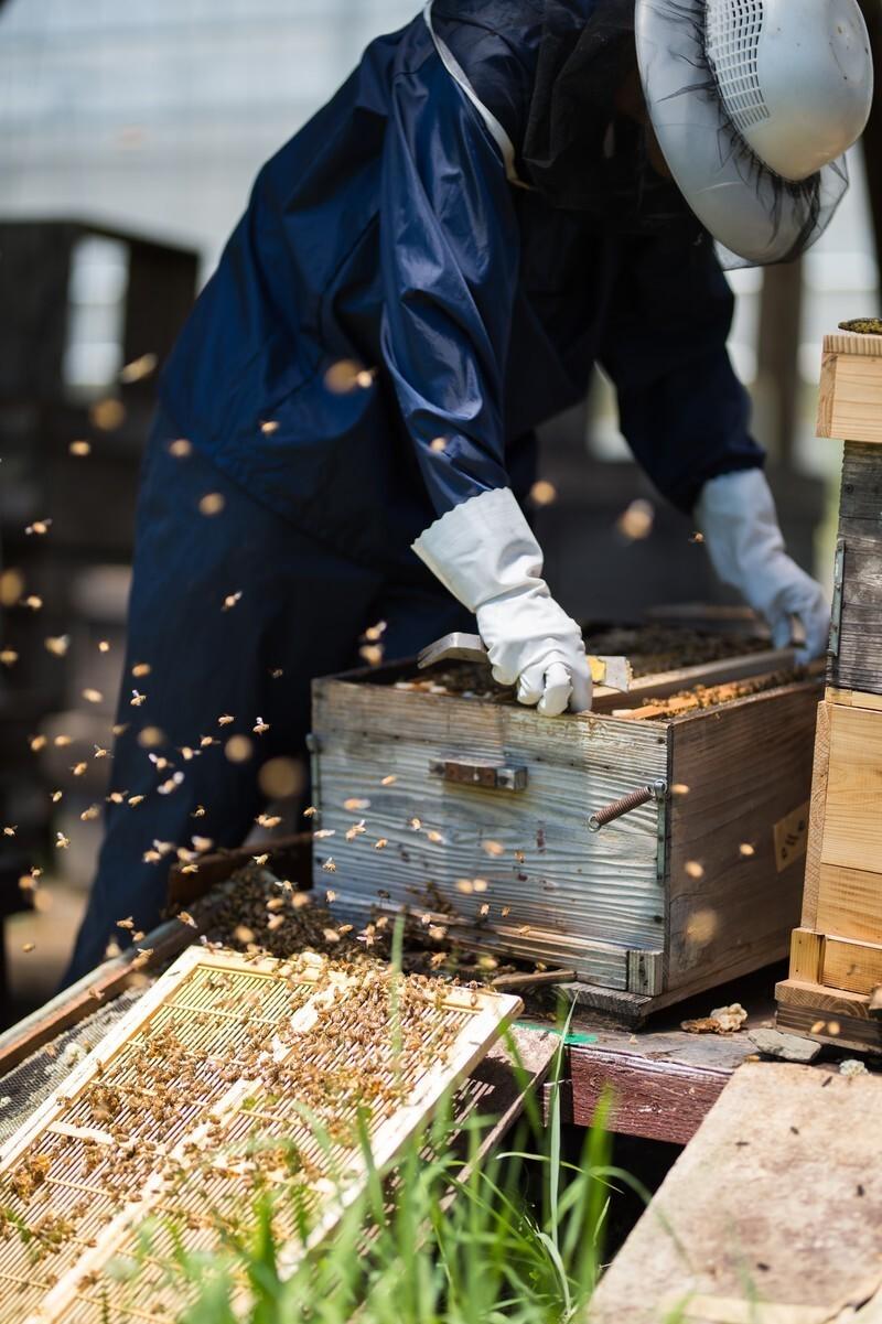 養蜂場のミツバチ