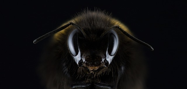 正面から見た蜂