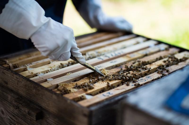 蜂の棲む木箱