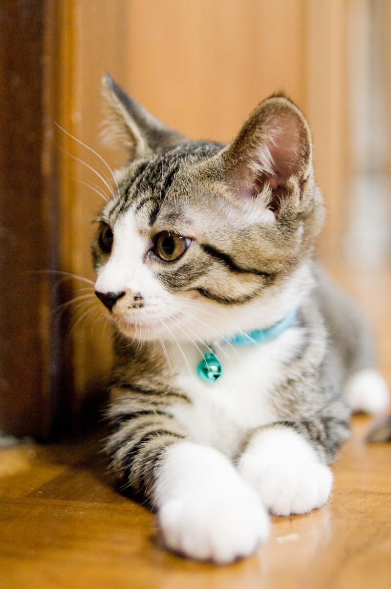 【夢占い】猫を飼う夢