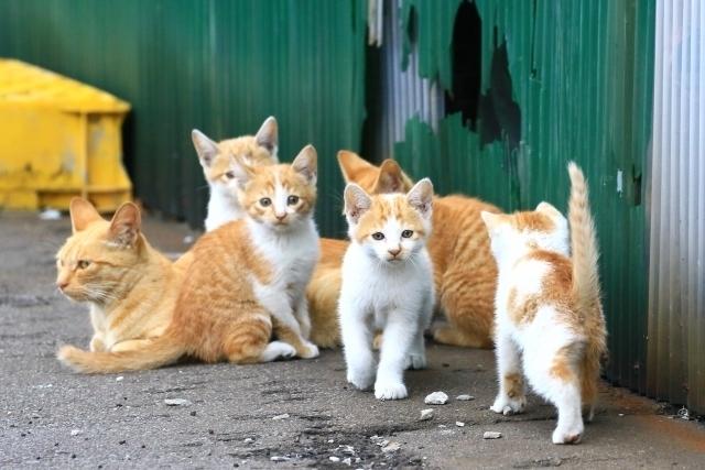 【夢占い】出てくる猫の数が多い夢