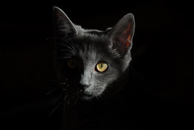【夢占い】猫が死んでしまう夢