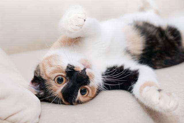 【夢占い】なついてくる猫の夢