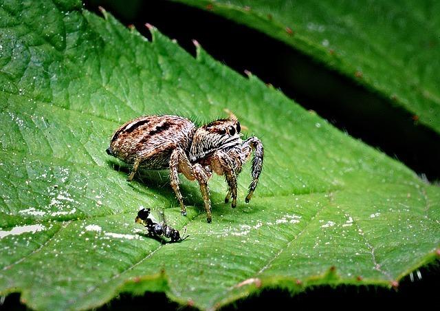 蜘蛛とアリ