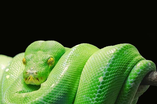 【夢占い】蛇に噛まれる夢