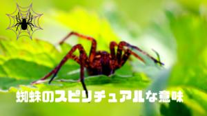 蜘蛛のスピリチュアルな意味とは?朝の蜘蛛と夜の蜘蛛でメッセージが異なる?