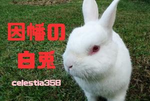 因幡の白兎のあらすじをご紹介!場所や意味・教訓について解説!