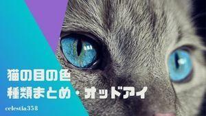 猫の目の色の種類まとめ!目の色は変化する?目の色が左右違う猫は?