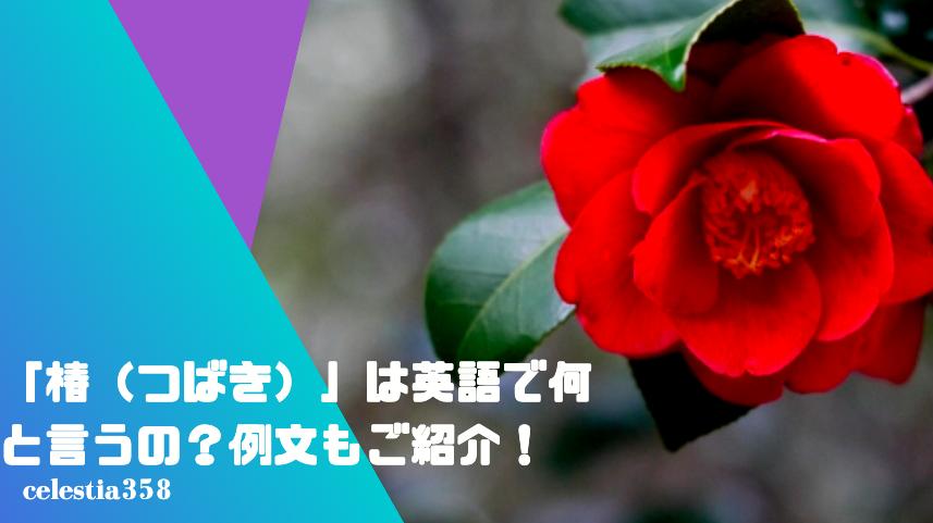 「椿(つばき)」は英語で何と言うの?例文もご紹介!