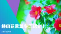 椿(ツバキ)の花言葉をご紹介!種類によって異なる?【白/赤/ピンク】