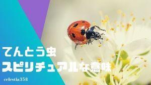 てんとう虫は幸運を運ぶスピリチュアルな虫!ジンクスやいろいろな国の言い伝えを紹介