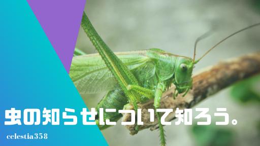 虫の知らせについて知ろう。その意味や由来、スピリチュアルなメッセージの実体験5つを紹介!
