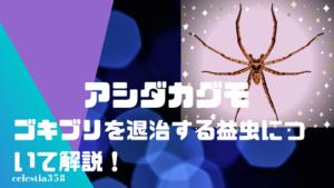アシダカグモは人に懐くって本当?ゴキブリを食べる益虫と仲良く同居する方法