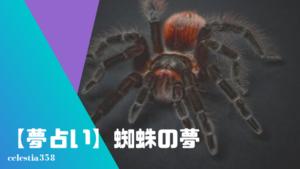 【夢占い】蜘蛛の夢の意味と心理を診断!蜘蛛の巣・大きな巨大な蜘蛛・出てくる・刺される・噛まれるなど