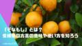 「ぞなもし」とは?愛媛県の方言の意味や使い方を知ろう